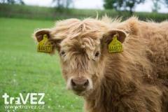 farmapark_sobehrdy_krava