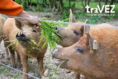 farmapark_sobehrdy_prasata