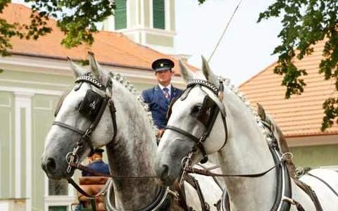 Hřebčín Kladruby nad Labem opět otevřen